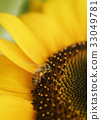 蜂蜂蜂蜜蜂向日葵向日葵向日葵夏天拷貝空間生動的黃色自然 33049781