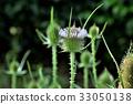 허브, 약용 식물, 화단 33050138