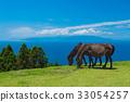 Cape Toki海角马 33054257