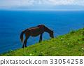 ม้า,สัตว์,ภาพวาดมือ สัตว์ 33054258