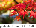 Maple leaf in the fall 33062585