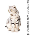 cute Cat isolated over white background. 33063566