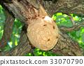 Nest of the Scyptome 33070790