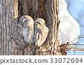 猫头鹰 野生鸟类 野鸟 33072694