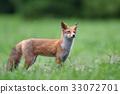Kita狐狸的孩子们 33072701