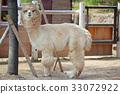 สัตว์,ภาพวาดมือ,สวนสัตว์ 33072922