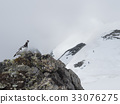 Male ginkgo wand watching territory 33076275