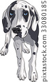 Vector. Puppy of the Great Dane. 33080185