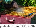 蜜蜂 养蜂业 蜂窝 33080289