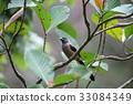 野生鳥類 野鳥 動物 33084349