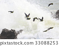 white-bellied, green, pigeon 33088253