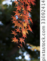 Autumn leaves 33092414