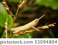 Grasshopper on nature leaves as background 33094804