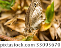 Butterfly on nature leaves as background 33095670