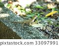 蜥蜴 有鱗目 蜥蜴亞目 33097991
