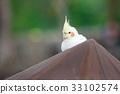 동물, 앵무새, 조류 33102574