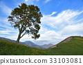 가을, 너도밤나무, 푸른 33103081