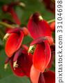 红 红色 花朵 33104698