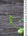 幼蟲 鳳蝶 蝴蝶 33105243
