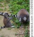 可愛 哺乳動物 猴子 33106090