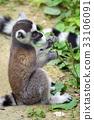 可愛 哺乳動物 猴子 33106091