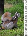 猴子 猴 狐猴 33106092