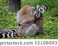 猴子 猴 狐猴 33106093