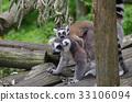 猴子 猴 狐猴 33106094