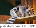 可愛 哺乳動物 猴子 33106095