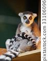 可愛 哺乳動物 猴子 33106096