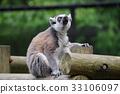 원숭이, 동물, 먹이 33106097