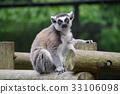 원숭이, 동물, 먹이 33106098