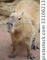 可愛 動物園 豚鼠 33106213