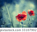 Red Poppy on Aqua tone background with bokeh 33107902