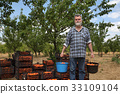 Agriculture, farmer in apricot orchard 33109104