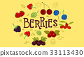 Berry Family Variety 33113430