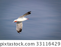 Flying seagull with background of sea 33116429