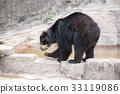 bear, bears, spectacled 33119086
