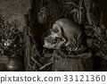 Still life with a human skull with desert plants 33121360