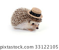 Little hedgehog. 33122105