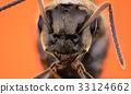 Head of ant 33124662