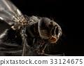 Fly extreme macro 33124675
