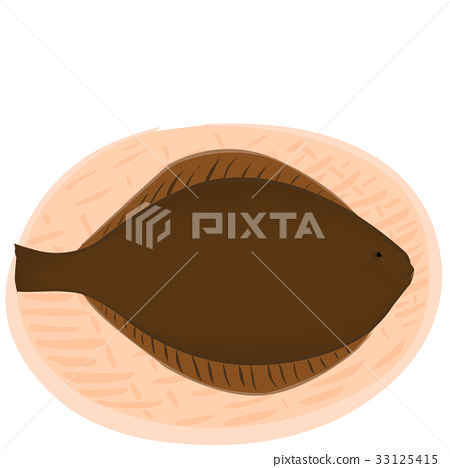 Fish illustration flounder 33125415