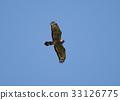 wild bird, bird, birds 33126775