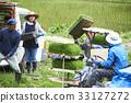 水稻种植水稻幼苗的制备 33127272