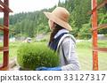 水稻种植水稻幼苗的制备 33127317
