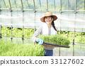Development of plastic greenhouse rice seedlings 33127602