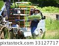 水稻种植水稻幼苗的制备 33127717