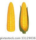 corn, vector, vegetable 33129036