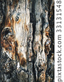abstract detail of an old tree trunk 33131548